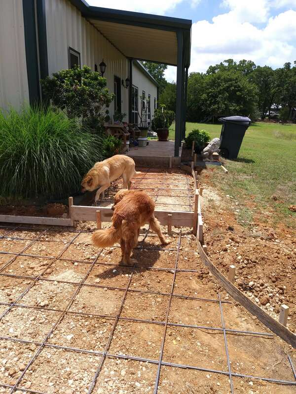 Two of our dogs checking out the new step up from the parking area to the front porch walkway.