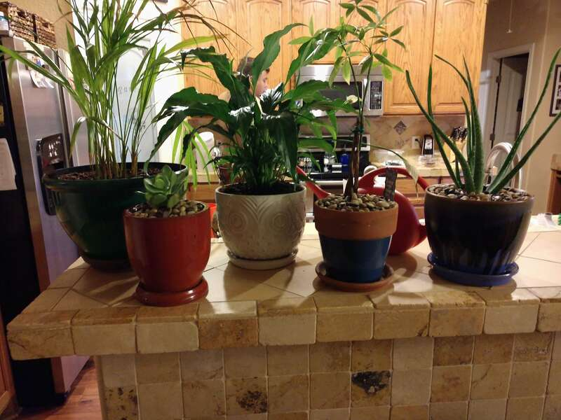 Multiple house plants on kitchen counter being watered